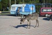 Last summer in Lapland